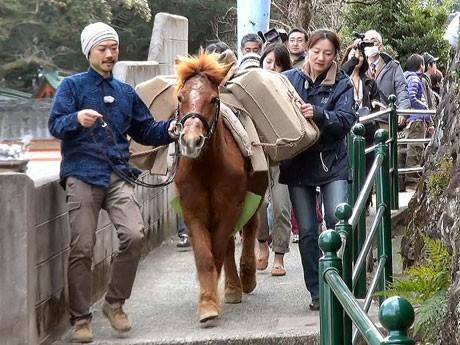 伊良林の狭い道を懸命に歩く対州馬の里子(写真提供=高橋幸秀さん)