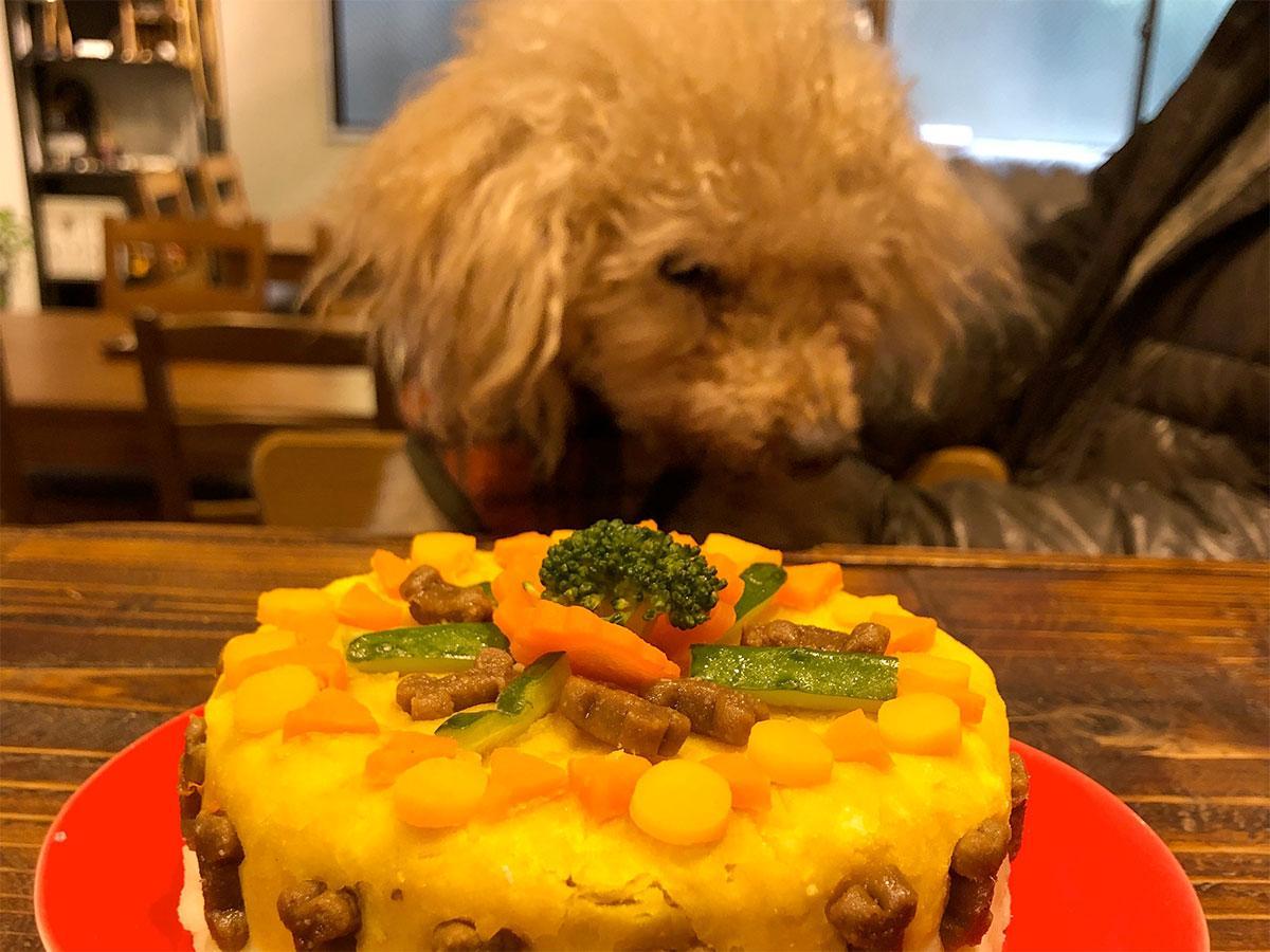 16歳の誕生日を迎えた看板犬トニー