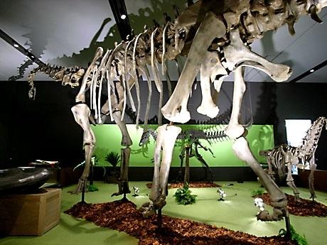 沖縄初公開となる全長27メートルの草食恐竜「ディプロドクス」)をはじめ、大型全身骨格復元約50点を含む標本や資料約300点を展示する