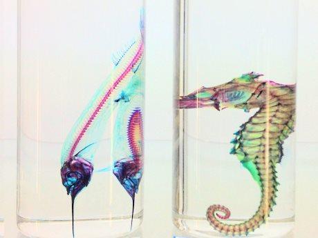 冨田伊織さんが表現する「透明標本」の世界