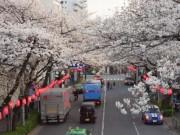 中野でオープントップバス「桜めぐり」ツアー開催へ-イベントスペースで地域交流会も