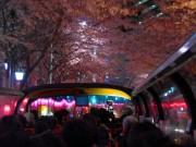 中野で「桜巡り」バスツアー オープントップバス復活、2キロの桜トンネルを体感