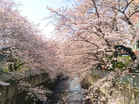 JR東中野駅東側の神田川と中央線(4月6日撮影)