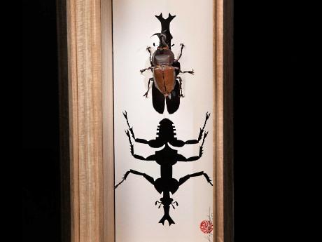 中野ブロードウェイで小林和史さん個展 「1枚の紙とハサミで生み出す昆虫」