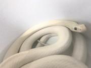 区内在住レスラー政宗さん宅から行方不明になった白蛇、いまだ見つからず