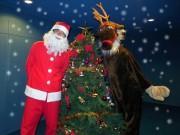 なかのZEROプラネタリウムでクリスマス特別投影 聖夜の逸話交え解説