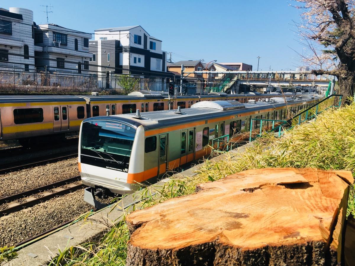 伐採された桜の切り株とJR中央・総武線