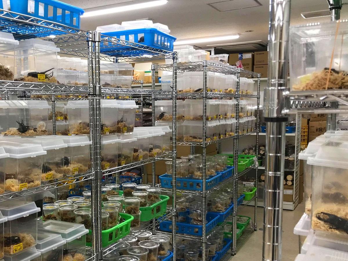 店内に陳列されているカブトムシやクワガタ
