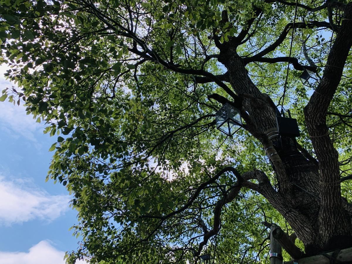 樹木に取り付けられたWi-Fiアクセスポイント