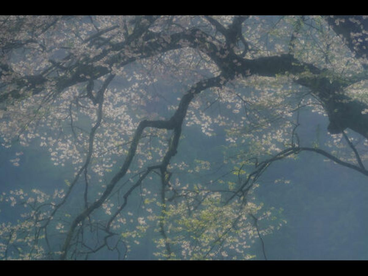 井上嘉代子さんの作品 ©井上嘉代子
