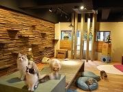 アメリカ村に猫カフェ「猫の時間」-天神橋の本店に次ぎ2号店オープン