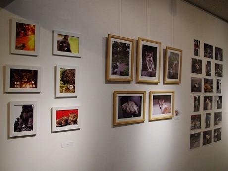 9人の猫好きの写真家が捉えた写真を展示