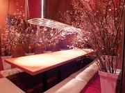 なんばの焼肉屋で1日1組限定「桜部屋」 道頓堀で一足先に花見楽しむ