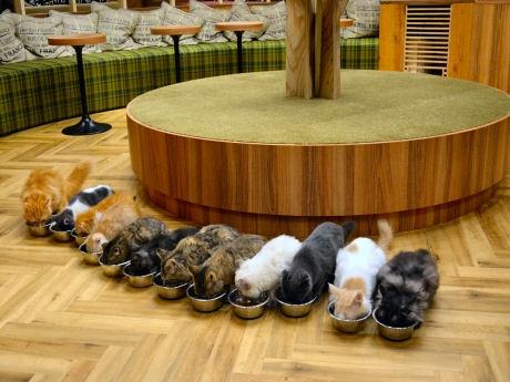 15匹が並んで食べる「ごはんタイム」