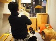 心斎橋の保護猫複合施設で「ネコビル男祭り」初開催へ 猫好き男子をターゲットに