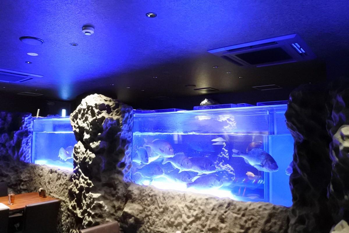 長さ7メートルの水槽に鯛が泳ぐ