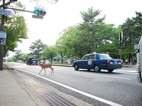 道路を横断する鹿(2015年6月19日17時40分ごろ撮影)