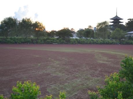 水草で真っ赤になった荒池(8月5日18時40分過ぎ撮影)