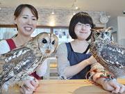 奈良のフクロウカフェ「わたわた」が1周年 11種のフクロウがお出迎え