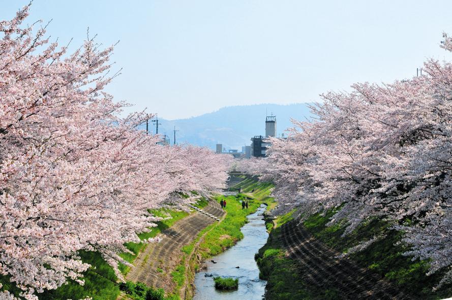 佐保川の桜(昨年の様子)