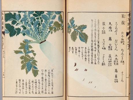 植物図と解説が記載されている本草図譜(練馬区蔵)