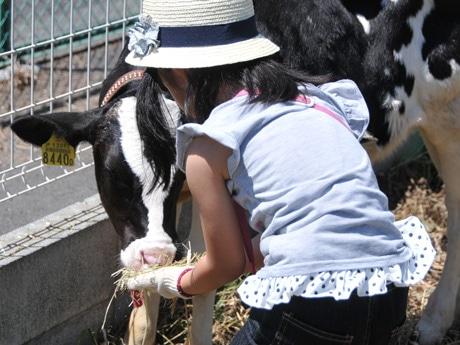子牛と触れ合う子ども
