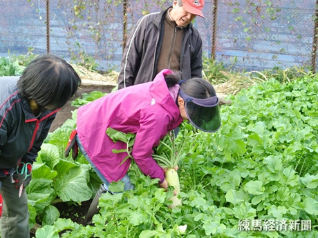 収穫実習の様子