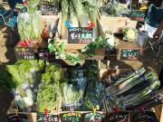 練馬各所で「マルシェ」開催へ 女性農業者による「女子マルシェ」も