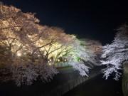 としまえんで「桜まつり」 開花予想は3月22日ごろ