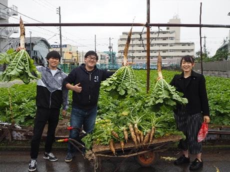 練馬大根の収穫を行った学生たち