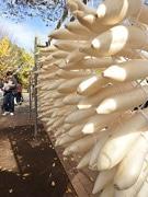 光が丘公園で「農業祭」 練馬大根の限定販売も