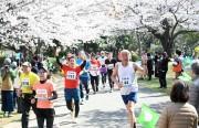 「練馬こぶしハーフマラソン」 5000人が桜の中を駆け抜ける
