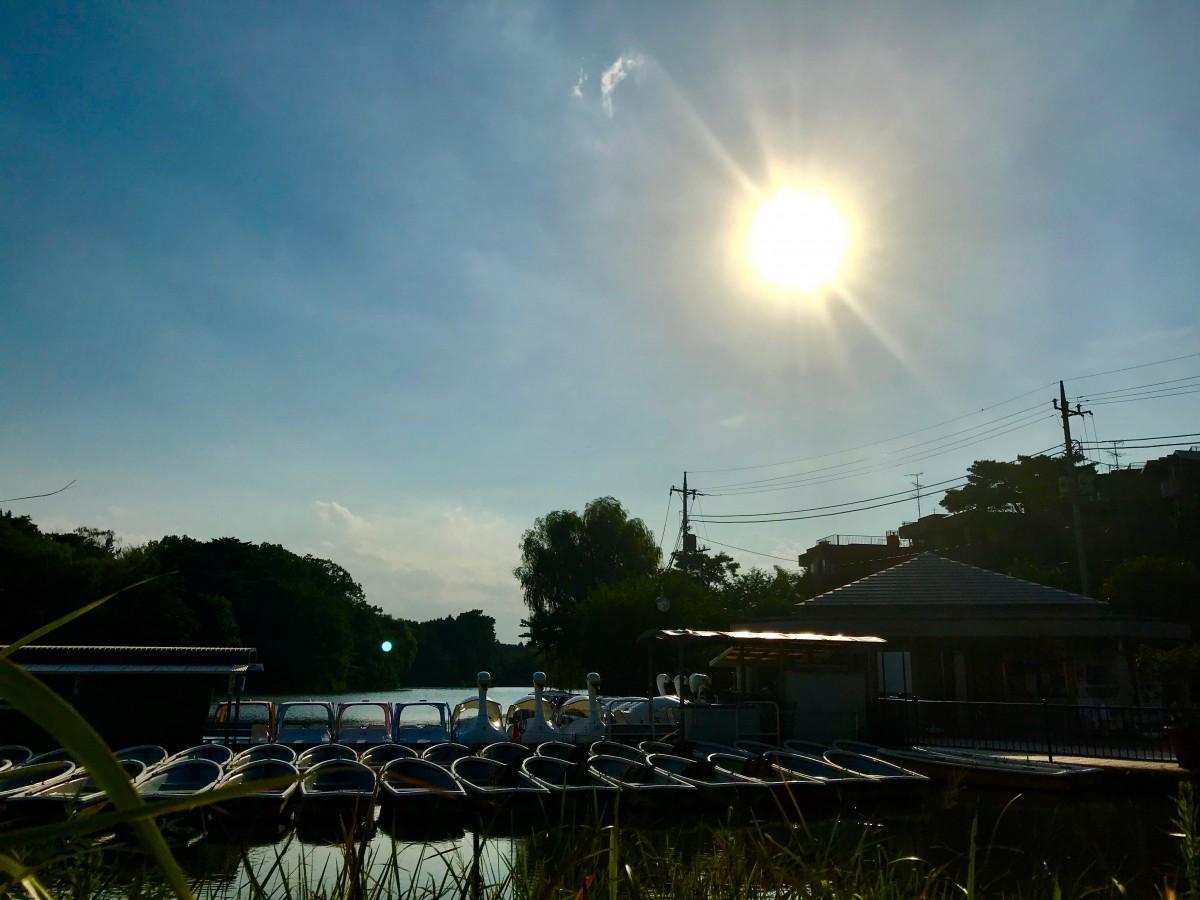 練馬区で最高気温39.6度を記録した日の石神井公園の様子(7月23日)