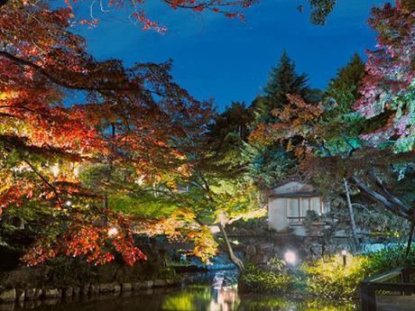 向山庭園の紅葉とライトアップの様子