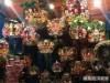 練馬大鳥神社で「酉の市」始まる 今年は二の酉まで