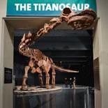 NY博物館に世界最大級の恐竜骨格模型 展示ホールに収まらず