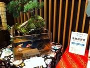 参加型イベント「ECO EDO日本橋~江戸に学ぶ心の涼」始まる-各所に金魚展示