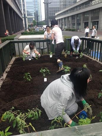 オフィス街で通勤者を横目に農作業