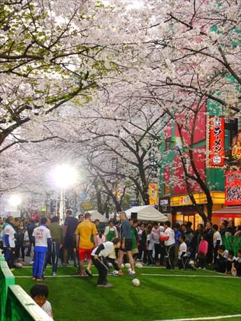 満開の桜の下、八重洲さくら通りを封鎖して行われた日本橋発祥の「ストリートラグビー」