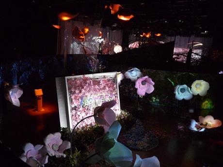 日本橋室町で「日本で一番早い」花見 生花とデジタルアートで花の楽園創出