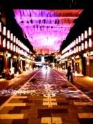 日本橋で恒例「桜フェス」 新たに福徳の森も桜ライトアップ