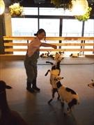 13階に開設した「大手町牧場」で地域産業の担い手となる「酪農」分野の人材を育成