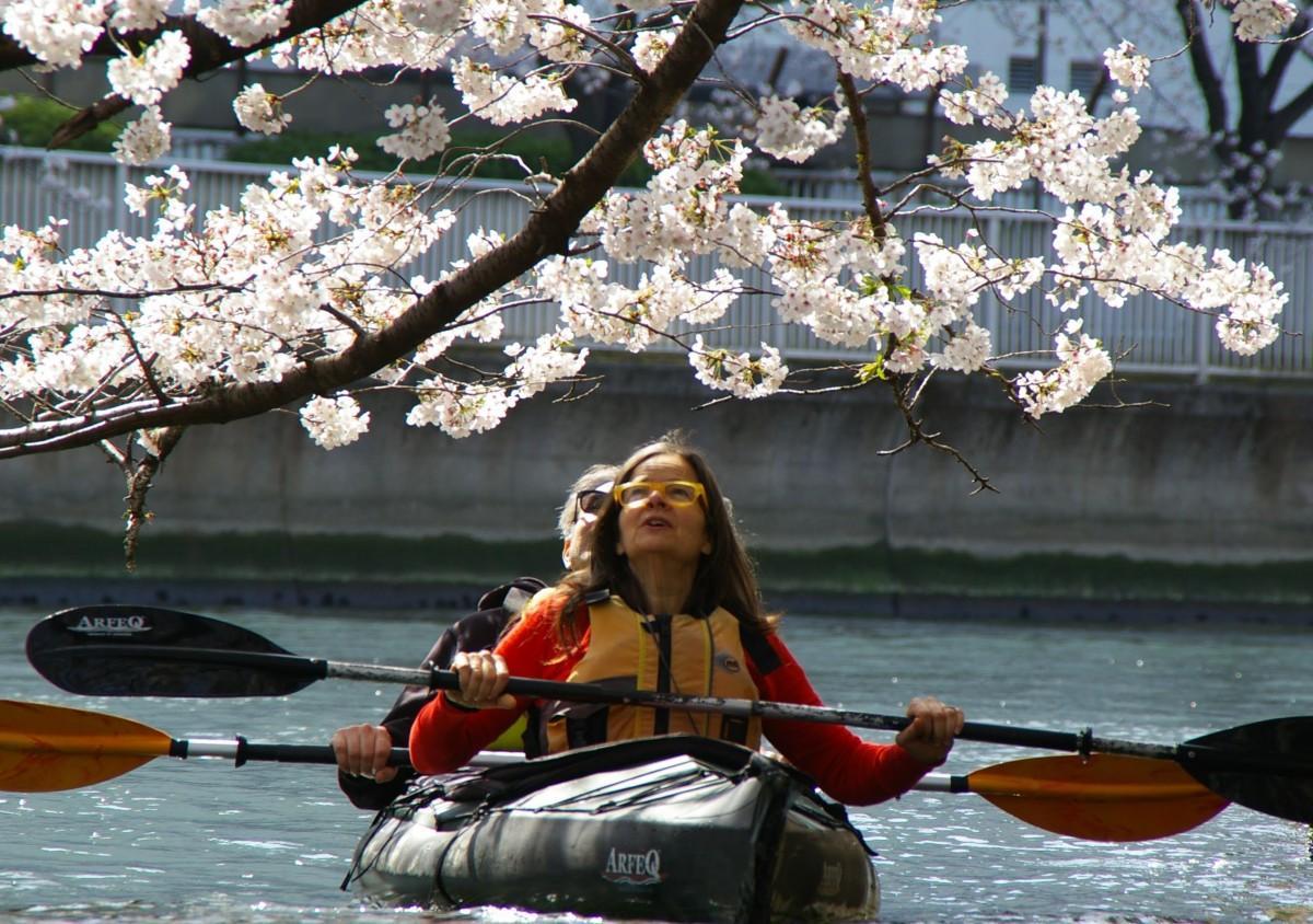 今年の「お花見カヤックツアー」の風景