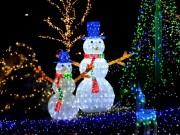 関東中央病院の「冬の癒やし」イルミが点灯-早世の看護師の思い今年もつなぐ