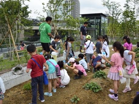 地元小学生の農業実習の様子