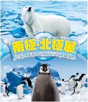 玉川高島屋S・Cで企画展「南極・北極展」 極地の自然現象ブリザード体験企画も