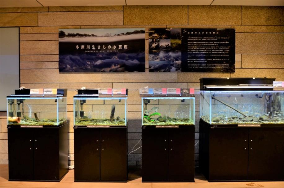 多摩川生きもの水族館