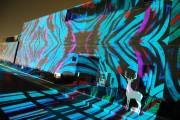 西宮の酒蔵で「光の宴」-日仏芸術家合作のイルミネーション作品展示