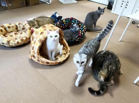 甲子園口にオープンした猫カフェ「ひなたぼっこ」。17匹がシフト制で出迎える。