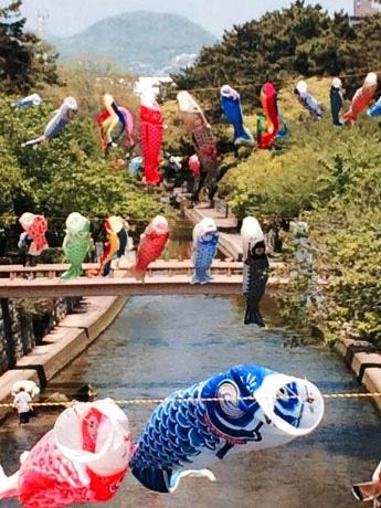 西宮を流れる夙川河川敷で見られるこいのぼり